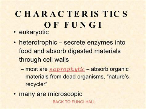 Pin Characteristics-of-fungi on Pinterest