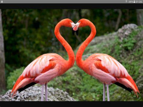Pin de Eva mr en flamenco | Pinterest | Animales bonitos ...