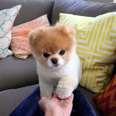 Pin de Rosario Zavala en perritos   Pinterest   Perros ...