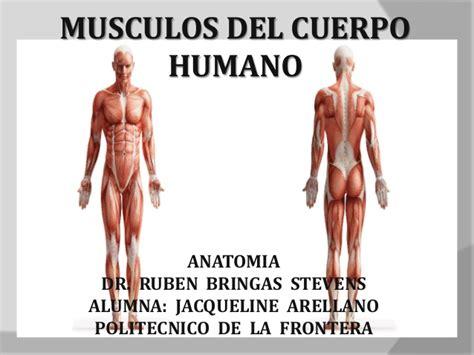 Pin Fotos de los musculos del cuerpo humano con nombres on ...
