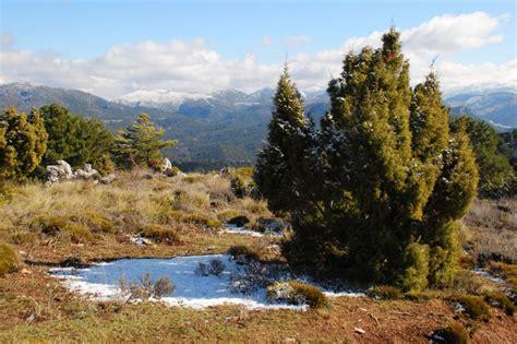Pinsapo y vistas de Sierra Nevada desde la Sierra de ...