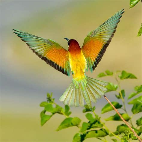 Pintar y dibujar las alas de las aves   Pintura y Artistas