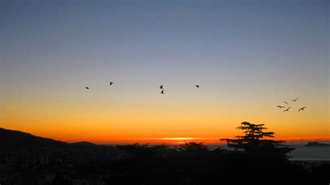 Pjaros Volando. Gallery Of Plantilla Para Pintar Aves ...