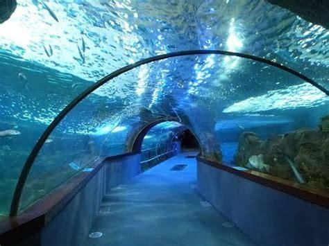 Places to see in   San Sebastian   Spain   Aquarium ...