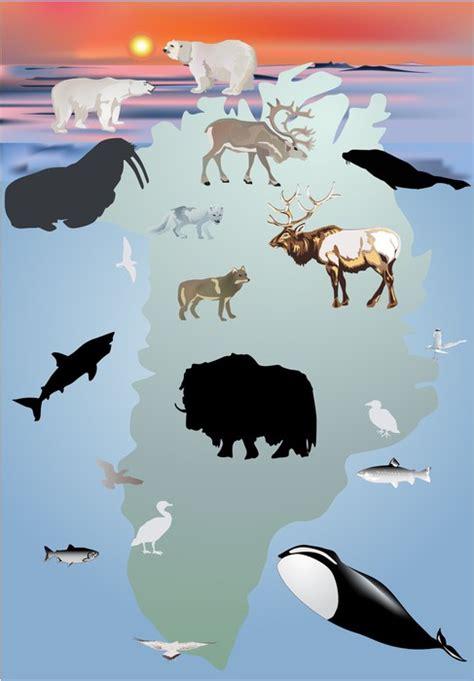 Plakat Kolekcja ilustracji zwierzęta Grenlandii • Pixers ...