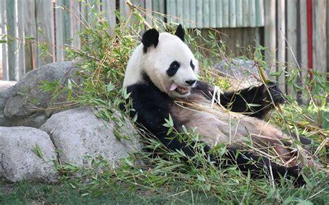 Plan en pareja genial, el Zoo Aquarium de Madrid | Un día ...