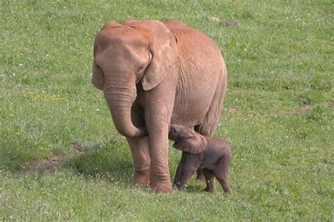 Planes con niños: dónde ver animales en semilibertad ...