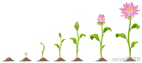 Plant clipart flower growing   Pencil and in color plant ...