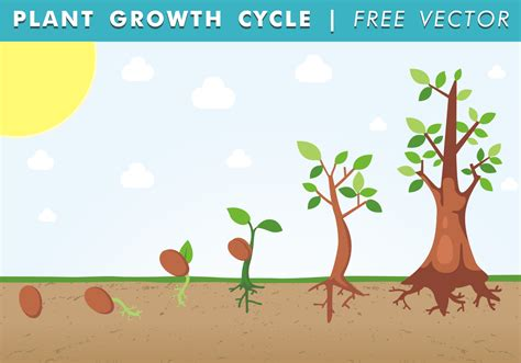 Plant Growth Cycle Free Vector   Download Free Vector Art ...