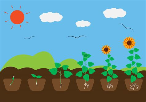 Plant Growth Cycle in Vector   Download Free Vector Art ...