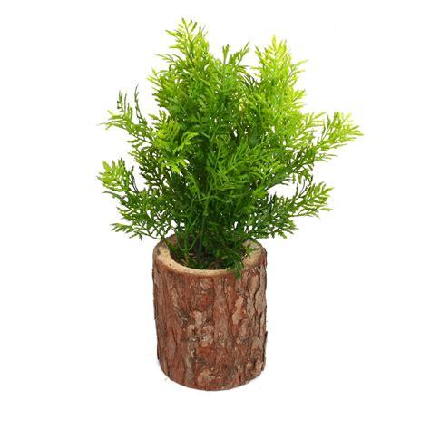 Planta Decorativa Con Tronco Falling Plantas decorativas ...