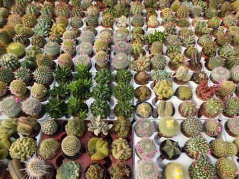 Planta del mes de Enero: Cactus y Crasas con un 15% de ...