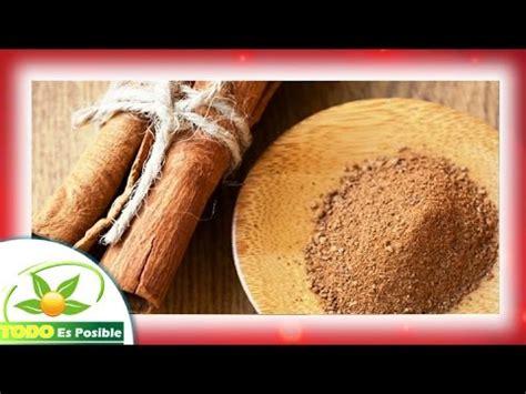 planta medicinal canela - propiedades de la canela molida ...