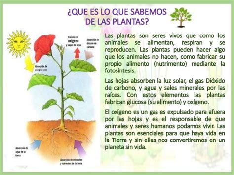 Planta Traqueofita Thinglink   Las Plantas Para Ninos ...