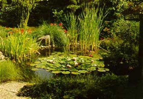 Plantación, plantar Plantas Acuáticas en estanques