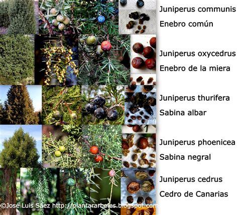 PLANTAR ÁRBOLES y arbustos: Tipos de frutos y semillas ...