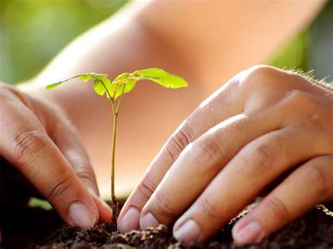 Plantar un árbol   Rural