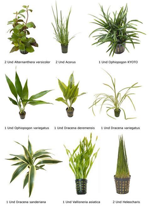 plantas acuaticas con sus nombres comunes - Buscar con ...