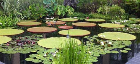 Plantas acuáticas para cultivar en un estanque