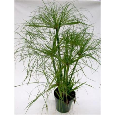 Plantas Acuáticas para Estanques y Fitodepuración ...