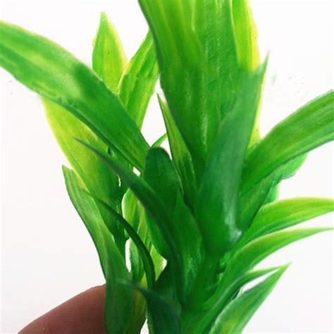 Plantas Acuaticas Peceras Peces Acuario Plantas ...