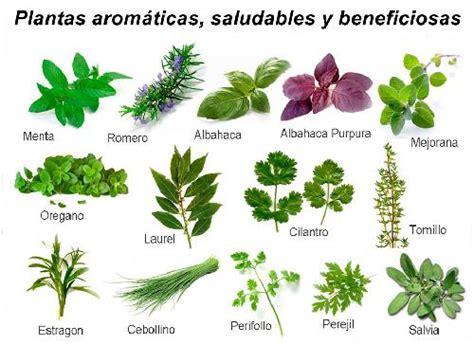 Plantas aromáticas, saludables y beneficiosas