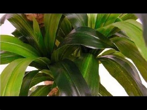 Plantas artificiales de calidad para decorar, bambú, ficus ...