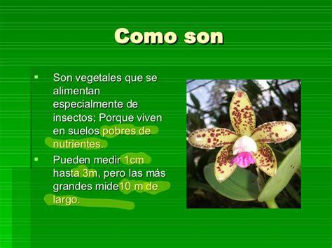Plantas Carnivoras 1