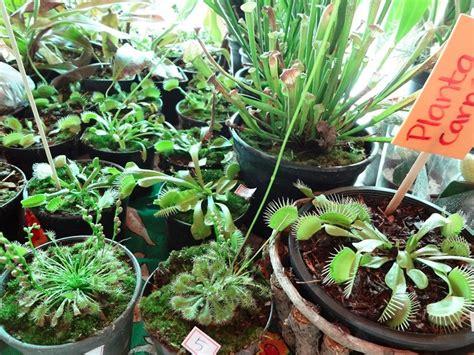 Plantas Carnívoras   GREENBOX