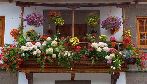 Plantas Colgantes De Exterior Para Decorar Balcones Y ...