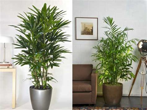 Plantas Colgantes De Exterior. Uma Simples Janela Por ...