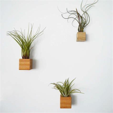 Plantas colgantes - ideas para el interior