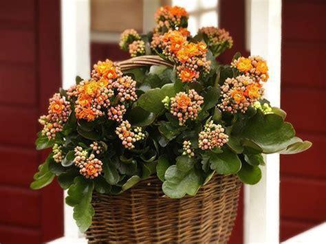 Plantas con Colores cálidos para los meses de Invierno ...