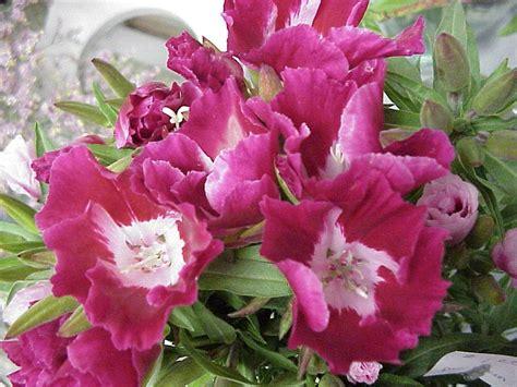 Plantas con flor :: La vida al completo