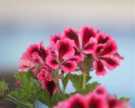 Plantas con flor para la primavera   Blog Verdecora