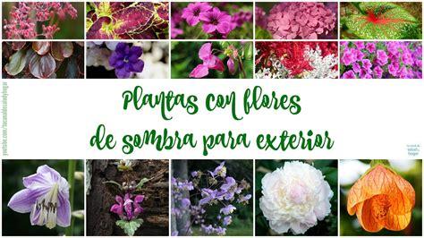 Plantas con flores de sombra para exteriores   YouTube