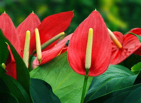 Plantas con flores y hojas elegantes. Plantas Ornamentales ...