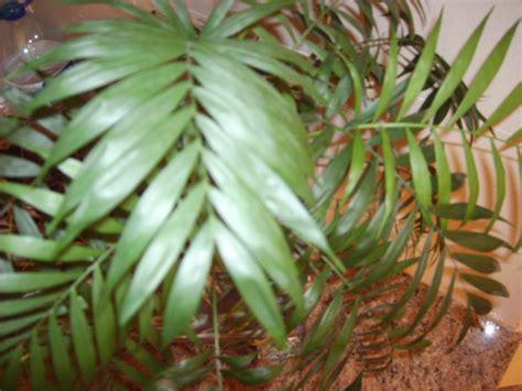 Plantas con nombres - Imagui