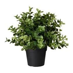 Plantas Cultivos - Compra Online IKEA