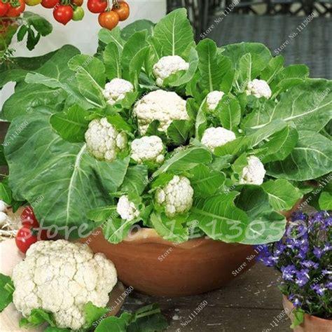 Plantas De Coliflor - Compra lotes baratos de Plantas De ...