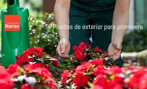 Plantas de exterior para plantar en primavera   Muebles Marián