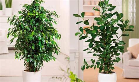 Plantas De Grandes interiores   Google Search | Home