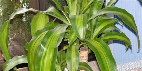 Plantas de interior beneficiosas | Fundació Ilersis