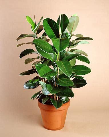 Plantas de interior beneficiosas - Paperblog
