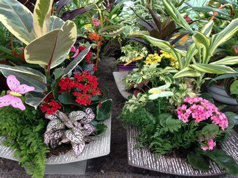 Plantas de interior Collado Villalba