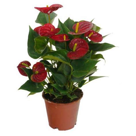 Plantas De Interior : Comprar Online Plantas De Interior ...