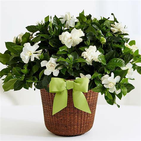 Plantas De Interior Con Flor, Plantas De Interior Con Flor ...