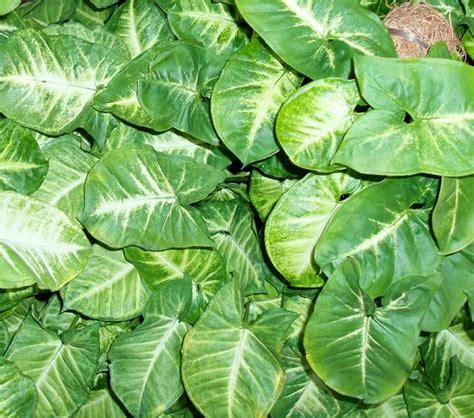 plantas de interior con poca luz (2) | Cuidar de tus ...