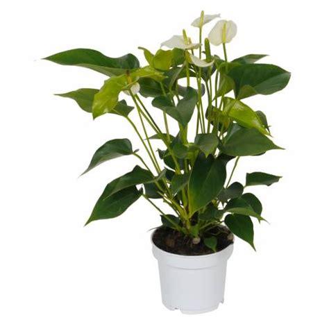 Plantas De Interior | Diseno casa