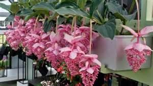 Plantas de interior para decorar la casa o la oficina ...